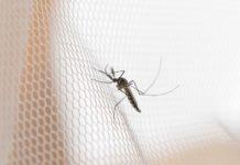 Professionelle Insektenschutz Schiebetüren zeigen sich dabei im Alltag als besonders praktisch und effektiv.