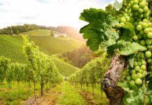 Wein: Zu welchem Gericht passt welche Rebsorte?